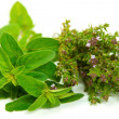 Oregano and thyme — Stock Photo