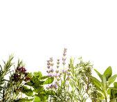 Herbs border on white — Stock Photo