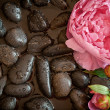 Pink flower on black pebbles - Stock Photo