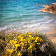 Wild flowers by the beach — Stock Photo