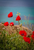 Poppies by the beach — Stock Photo