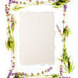 Lavender frame isolated on white — Stock Photo