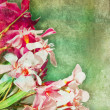 Vintage oleander frame — Stock Photo