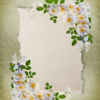 Stock Photo: Vintage white roses frame
