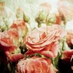 Vintage roses — Stock Photo #10609212