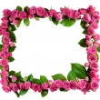 Roses frame, isolated — Stock Photo #10609277