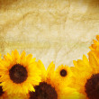 Sunflower border — Stock fotografie