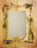 Watercolour lavender frame — Stock Photo