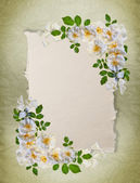 Vintage white roses frame — Stock Photo