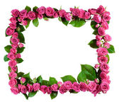 Roses frame, isolated — Stock Photo