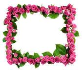 Roses frame, isolated — Stock Photo