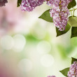 Stock Photo: Lilac spring flowers border design