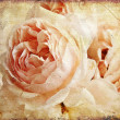 Vintage rose painting - Stock Photo
