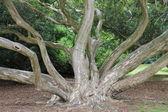 дерево жизни — Стоковое фото
