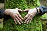 Hand heart on tree — Stock Photo
