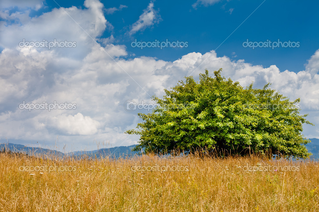 Single tree in nature with mountains, clouds and blue sky  Stock Photo #10174545