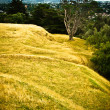 Golden Fields — Stock Photo #10265554