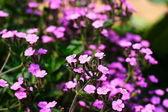 Petites fleurs roses dans le jardin ensoleillé — Photo