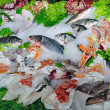 Show-window of Fish — Stock Photo