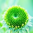 Core Of  Flower — Stockfoto
