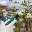Pruning Branches — Stock Photo