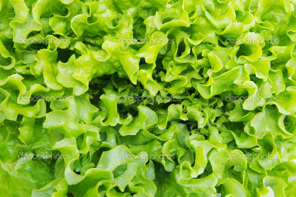 Fresh green lettuce leaves isolated on white background  Stock Photo #10347883