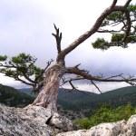 Tree on the stone — Stock Photo #10277589