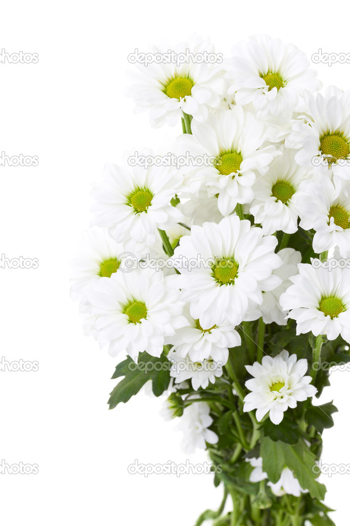 Bouquet of white flowers on a white background — Stock Photo #10452769