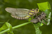 Euphydryas aurinia the couple is copulating butterflies on a branch on a green background. — Stock Photo