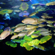Tropical Fish — Stock Photo #10705650