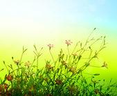 Beautiful Floral — Stock Photo