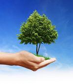 手には緑の植物 — ストック写真