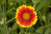 Beautyfull flower — Stockfoto