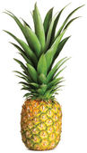 Pineapple isolated on a white background — Stock Photo