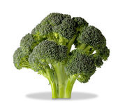 Brocolli tree isolated on white with clipping path — Stock Photo
