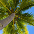 Palm tree — Stock Photo #10433026