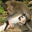 Monkey and domestic cat — Stock Photo #10463947