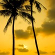 Palm Trees Silhouette At Sunset — Stockfoto