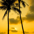 Palm Trees Silhouette At Sunset — 图库照片