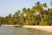 Seashore and green trees on the beach — Stock Photo