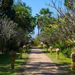 Stock Photo: Walking track in a tropical garden