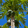 Stock Photo: Bunch Of Papayas