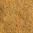 Grains of maize background — Stock Photo