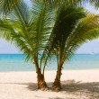Palm trees gateway to beautiful beach — Stok fotoğraf
