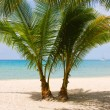 Palm trees gateway to beautiful beach — Stock fotografie