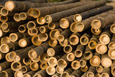 Bamboo rods outdoors — Stock Photo