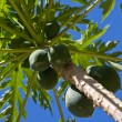 Bunch Of Papayas — Stock Photo