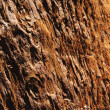 Closeup of sequoibark in California — Stock Photo #10303231
