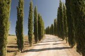 Une route de campagne en toscane, italie — Photo