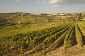 A vineyard in Chianti Tuscany, Italy — Stock Photo